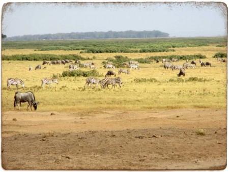 Animals on the plain